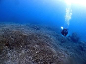 枝サンゴがびっしり