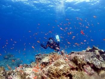珊瑚もたくさん、魚もたくさん石垣島の海は最高です!